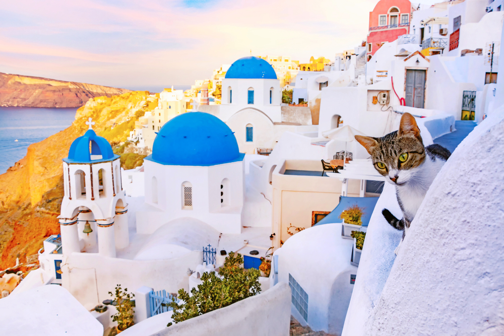 curious cat looking over the edge of a Santorini building - Little Passports photo gallery