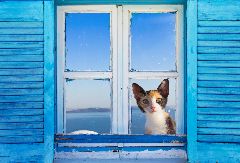 big-eared cat looking through a window of a Santorini home - Little Passports photo gallery