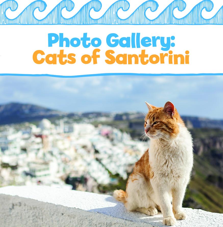Photo Gallery: Cats of Santorini