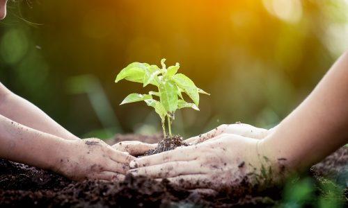 Serve your community by planting trees at your home or in community gardens