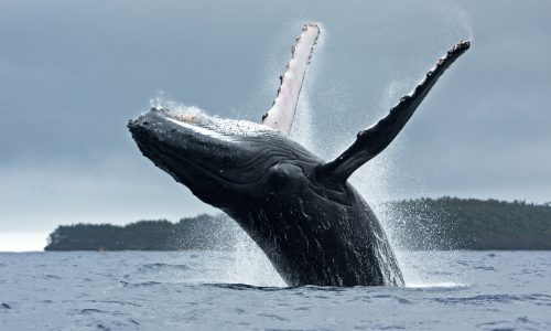 Learn how whales help the Earth thrive with Little Passports
