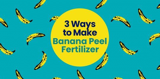 3 Ways to Make Banana Peel Fertilizer