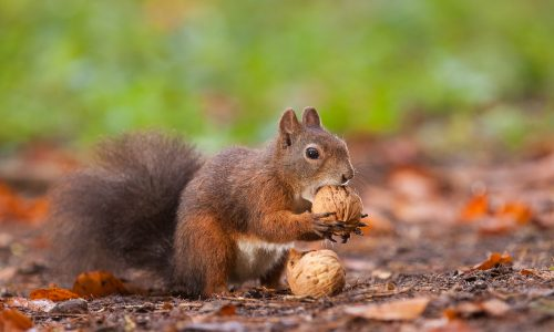 Learn how squirrels help the Earth thrive with Little Passports