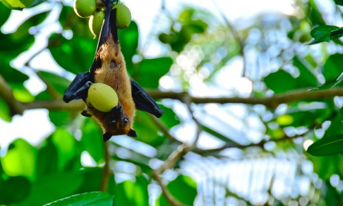 Learn how bats help the Earth thrive with Little Passports