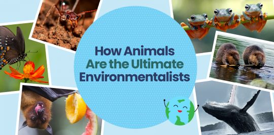 Celebrate Earth Day with Little Passports by learning about how animals are the ultimate environmentalists