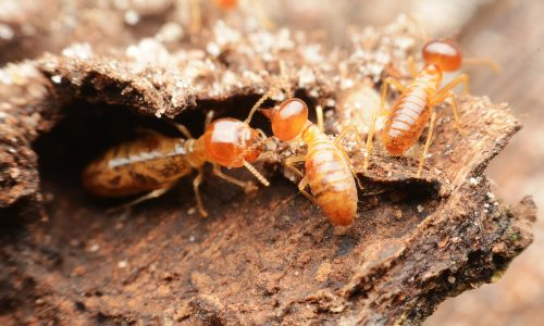Learn how termites help the Earth thrive with Little Passports