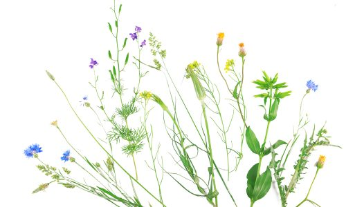 Make natural paintbrushes on your Little Passports science walk