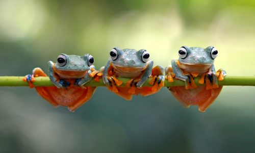 Learn how frogs help the Earth thrive with Little Passports