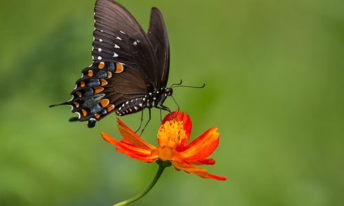 Learn how butterflies help the Earth thrive with Little Passports