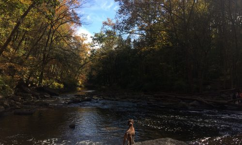 Hike this kid-friendly trail at Wissahickon Valley Park