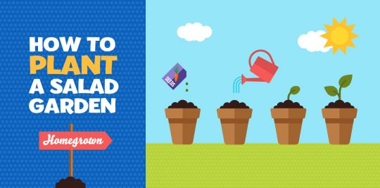 Learn how to plant a salad garden with Little Passports